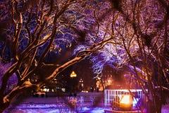 用明亮的圣诞灯和雪报道的树枝 冬天城市公园 抽象空白背景圣诞节黑暗的装饰设计模式红色的星形 假日街道照明 库存照片