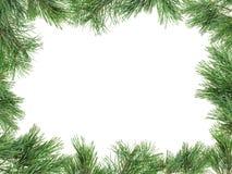 用杉木枝杈做的框架在白色 库存图片