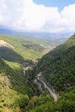 用杉木森林报道的山谷看法 库存照片