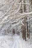 用树冰和雪包括的结构树 免版税库存照片
