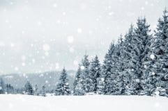 用树冰和雪盖的冷杉木在山 免版税图库摄影