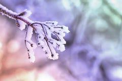 用树冰报道的冷淡的分支 图库摄影