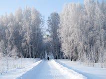 用树冰报道的桦树立场 免版税库存照片