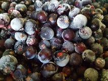 用树冰特写镜头盖的黑醋栗 冻结的浆果 宏指令 图库摄影