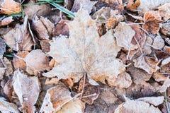 用树冰盖的下落的干燥叶子 库存照片