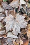 用树冰盖的下落的干燥叶子 免版税图库摄影