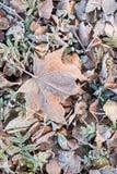 用树冰盖的下落的干燥叶子 图库摄影