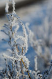 用树冰盖的枝杈的特写镜头 免版税库存图片