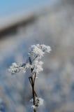 用树冰盖的枝杈的特写镜头 图库摄影