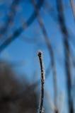 用树冰盖的枝杈的特写镜头 免版税图库摄影