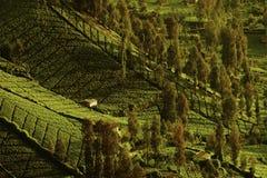 用树包括的农场土地临近Mt Bromo火山 库存照片