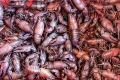 用桶提丰富用在底部的信号小龙虾 免版税图库摄影