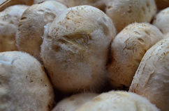用模子盖的蘑菇 免版税库存照片