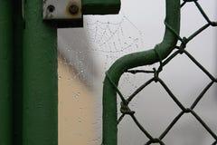 用水掩盖的蜘蛛网下降,捷克,欧洲 免版税库存照片