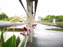 用水被盖的花 免版税库存图片