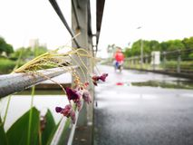 用水被盖的花 库存图片