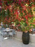 用波士顿常春藤盖的大阳台 免版税库存照片