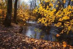 用浆划在森林河的皮船的夫妇 秋天金黄肢体和叶子包围的森林湖在秋天天 库存照片