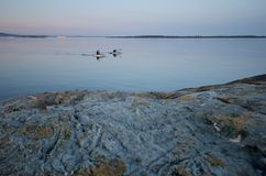 用浆划在海湾的两艘皮艇在与岩石的日落在前景和一艘游轮在距离 图库摄影
