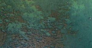 用浆划在绿松石水域4k中的冲浪者 股票视频