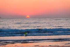 用浆划海洋日出的海浪滑雪运动员 库存照片