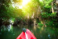 用浆划独木舟通过美洲红树森林幻想风景  免版税库存照片