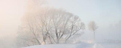 用灰白盖的冬天树在早晨点燃了与阳光 免版税库存图片