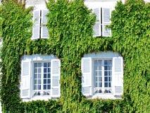 用狂放的葡萄叶子盖的白色老房子  库存照片