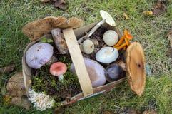 用狂放的蘑菇的不同的类型的篮子 免版税图库摄影