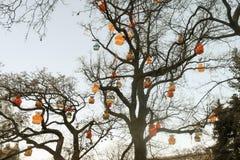 用玩具装饰的简单的街道树为假日欧洲 免版税库存图片
