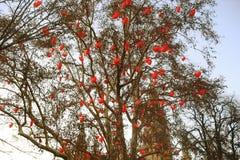 用玩具装饰的简单的街道树为假日欧洲 库存图片