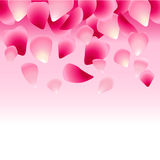 用玫瑰花瓣装饰的花卉桃红色背景 库存照片