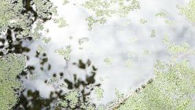 用白色瓣盖的湖水在秋天在slo mo 股票录像