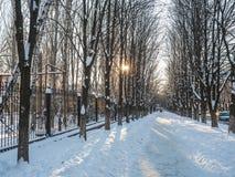用白色雪盖的冬天公园 库存照片