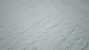 用白雪报道的冬麦的领域的鸟瞰图 自然本底 股票视频