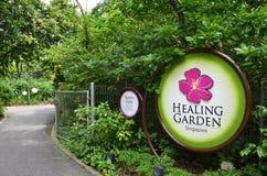 医治用的庭院在新加坡植物园里 免版税库存照片