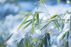 用看法的雪关闭盖的冻竹分支叶子 免版税图库摄影