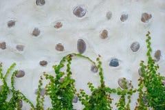 用石头和植物装饰的墙壁 图库摄影