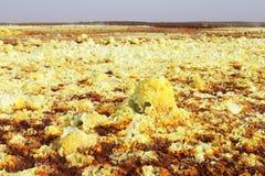 用硫处理在Dallol火山里面, Danakil消沉,埃塞俄比亚爆炸火山口的花  免版税库存照片