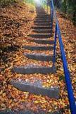 用秋叶盖的台阶 库存照片