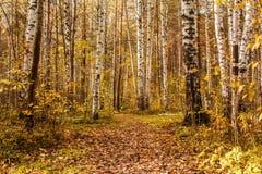用秋叶盖的秋天草甸的风景在杉木森林里 库存照片