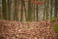 用秋叶盖的路 图库摄影