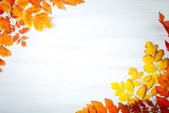 用秋叶装饰的白色木桌 秋天背景复制空间 免版税库存照片