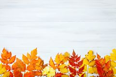 用秋叶装饰的白色木桌 秋天背景复制空间 库存图片