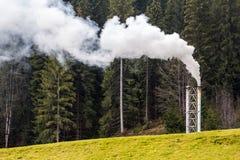 用管道输送与厚实的白色烟在杉木森林里 免版税库存图片