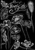 用粉笔写拉长的样式白花、框架和书法词在浅黑背景 库存例证