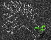 用粉笔写树等高在柏油路和年轻成长概念的 免版税图库摄影