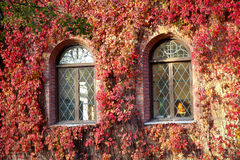 用红色叶子盖的一个老大厦的Windows 库存照片