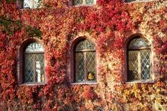 用红色叶子盖的一个老大厦的Windows 免版税库存照片