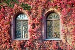 用红色叶子盖的一个老大厦的Windows 免版税库存图片